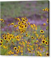 Perky Golden Coreopsis Wildflowers Canvas Print