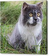 Persian Cat Sit In Green Yard Canvas Print