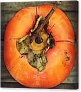 Persimmon IIi Canvas Print