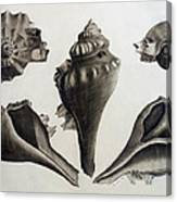 Perspectives Of A Shell Canvas Print