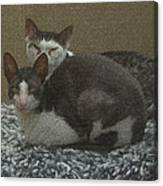Peso And Pancho Portrait Canvas Print