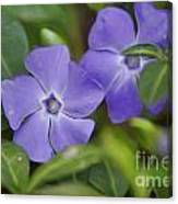 Petal Me Purple Canvas Print