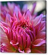 Petal Motion Canvas Print