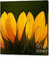 Petales De Soleil - A12 Canvas Print