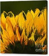 Petales De Soleil - A41b Canvas Print