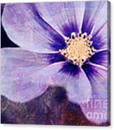 Petaline - 06bt04b Canvas Print