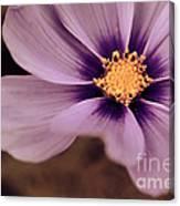 Petaline - P04d Canvas Print