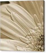 Petals 2 Canvas Print