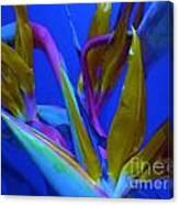Petals From Paradise Canvas Print