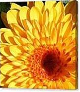 Petals Of Yellow Canvas Print