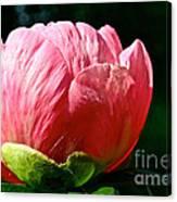 Petals Up Canvas Print