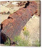 Petrified Stone Tree Trunk Canvas Print