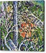 Petroglyph Pines Canvas Print