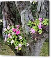 Petunia Tree Canvas Print