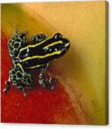 Phantasmal Poison Dart Frog Canvas Print
