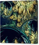 Phloral Activity  Canvas Print