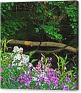 Phlox Along The Creek 7185 Canvas Print