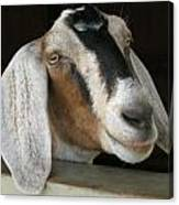 Photogenic Goat Canvas Print