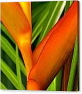 Photograph Of A Parrot Flower Heliconia Canvas Print