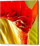 Photograph Of A Red Ginger Flower Canvas Print
