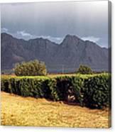 Picacho Peak Hedge Canvas Print