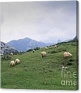 Picos De Europa Canvas Print