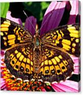 Picture Perfect    Butterfly 003 Canvas Print