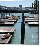 Pier 39 San Francisco Canvas Print