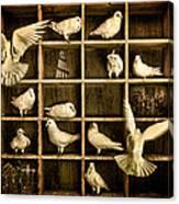 Pigeon Holed Canvas Print