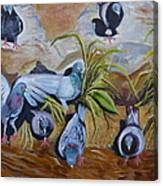 Pigeons At Rancho De Chimayo Canvas Print