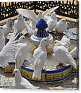 Pigeons Of Maria Luisa Parque Canvas Print