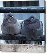 Pigeons Perching Canvas Print