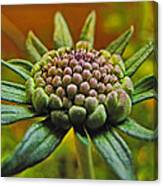 Pinchshin Bud Canvas Print