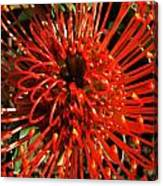 Pincushion Detail Canvas Print