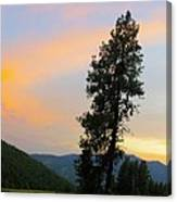 Pine And A Painted Sky Canvas Print