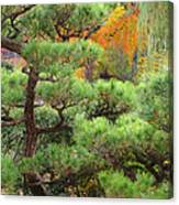 Pine And Autumn Colors In A Japanese Garden II Canvas Print