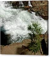Pine And Falls Glen Alpine Falls Canvas Print