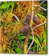 Pine Cones And Needles On A Branch Canvas Print