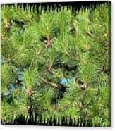 Pine Cones And Needles Canvas Print