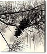 Pine Cones In The Treetops Canvas Print