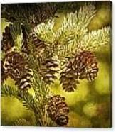 Pine Cones No.056 Canvas Print