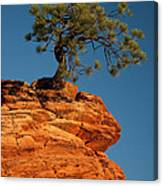 Pine On Rock Canvas Print