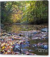 Pine River In Fall Canvas Print