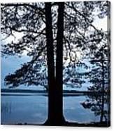 Pine Silhuette Canvas Print