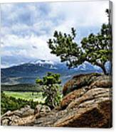 Pine Tree And Mountains Canvas Print