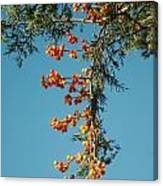 Pine Tree With Berries Canvas Print