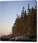 Pine Trees Along The Rocky Coastline Canvas Print