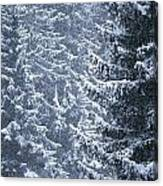 Pine Trees Covered In Snow, Les Arcs Canvas Print