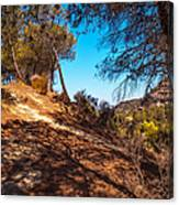 Pine Trees In El Chorro. Spain Canvas Print