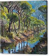 Pine Wood Reflections Canvas Print